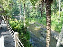 谷底に流れる川を望む