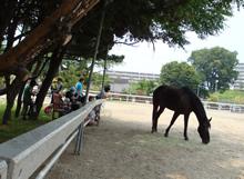 人と馬がつくる、癒しの環 〜ホースセラピー〜