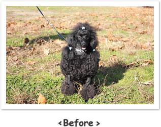 犬の写真教室 犬の写真を上手に撮りたい!