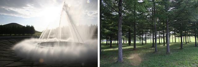 迫力満点『海の噴水』 木洩れ日が眩しい、カラマツの木立