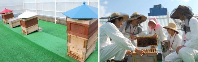 ミツバチの巣箱 日々のお世話