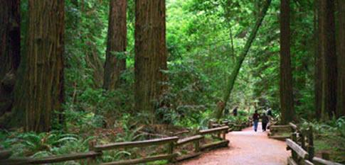 ミューア・ウッズ国定公園(カリフォルニア州)